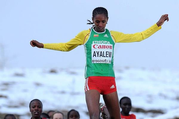 Hiwot Ayalew at the 2013 IAAF World Cross Country Championships (Getty Images)