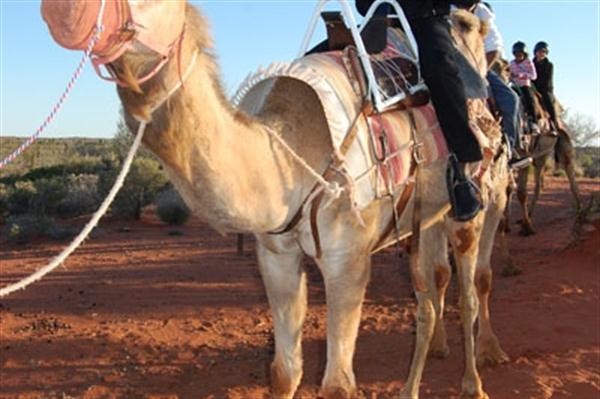 Usain Bolt Camel back riding – Sunset on Ezrac Mountain (Freelance)