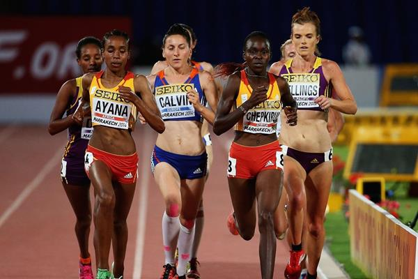 Almaz Ayana in the 5000m at the 2014 IAAF Continental Cup (Getty Images)