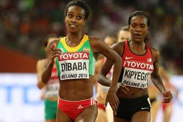 Genzebe Dibaba in the 1500m at the IAAF World Championships, Beijing 2015 (Getty Images)