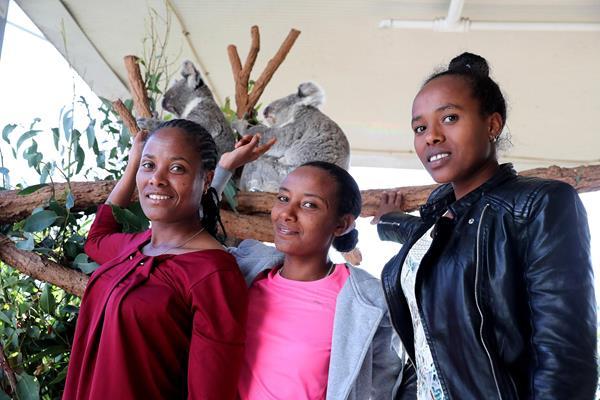 Merima Mohammed, Muluhabt Tsega and Goitetom Haftu visit with koalas at the Wild Life Sydney Zoo (Victah Sailer/organisers)