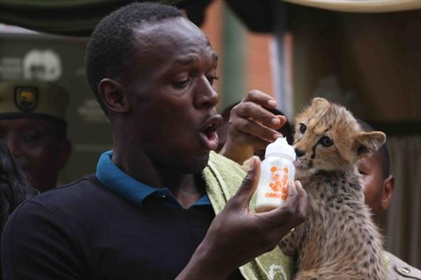 Usain Bolt, feeding his newly adopted cheetah