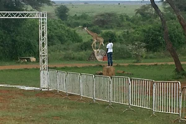 Organisers prepare the course for the IAAF Run 24-1 event in Nairobi National Park (Organisers)