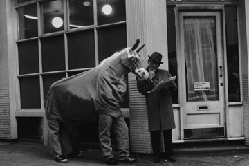 Wacky horse ()