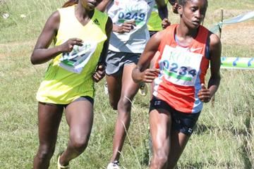 Gladys Chemweno (0234) followed by Gladys Chepkemboi (left) and others negotiate a bend during the women's 8km race of the KCB/Athletics Kenya Cross Country held at Eldoret Polytechnic. Chemweno won the race with Chepkemboisecond. (Jared Nyataya (Daily Nation))